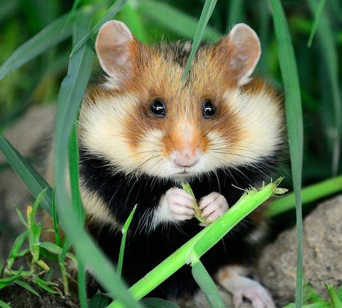 Làm thế nào để đuổi chuột ra khỏi nhà - Diệt côn trùng Anh Thư
